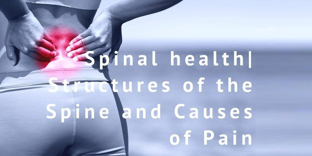 Structures of the Spine and Causes of Back Pain