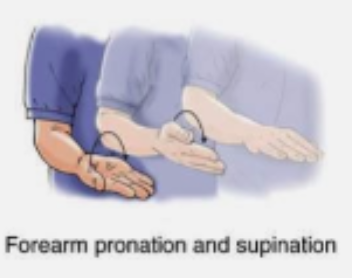 Golfers elbow exercises - Supination & Pronation