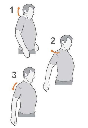 shoulder pain exercises - shoulder circles
